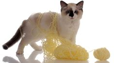 7 Must Know Household Hazards for Cats