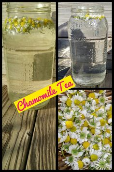 Chamomile Sun Tea  I grew chamomile, harvested the flowers and made sun tea. Then I soaked my seeds in a small amount of the tea before planting.   www,gardenanywherebox.com