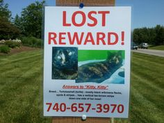 """Answers to """"Kitty, Kitty"""" - Columbus Life How far can a cat roam? They had signs for miles. I hope they find her."""