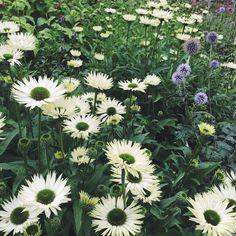 """44 gilla-markeringar, 4 kommentarer - Ulrika Gustafsson (@plingsulli) på Instagram: """"Längtar efter att skapa nya mönster. #flowers #inspiration #mönster"""""""