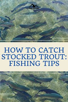 The term stocked refers to fish that are born and raised in hatcheries then released into the wild. Trout fishing is one of America's favorite pastimes and an estimated 35% of all anglers specifically fish to land a trout. This article covers tips and techniques on how to catch stocked trout. For the purpose of this article, we will consider trout that is released in the last 6 months to be considered as a newly released fish. Trout Stocking, Salmon Eggs, Trout Fishing Tips, Rainbow Trout, Favorite Pastime, Best Fishing, Wildlife, America, 6 Months