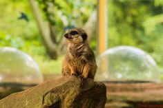 https://flic.kr/p/yVqJCf | 20150919-_DSC9740 | Bristol Zoo
