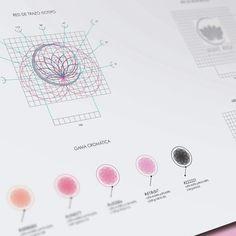 Creación de marca Mezcal Agave Rosa