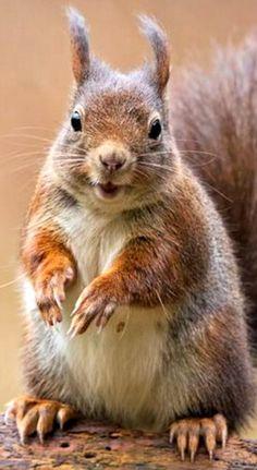 "Squirrel:  ""I fluffed up my fur a bit, to keep warm!"""