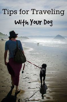 How to take your dog on vacation: Tips for traveling by car, staying sane in…