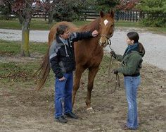 Visiting a horse before purchase | The 11 Biggest Mistakes When Buying Your First Horse