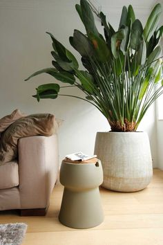 Large Concrete pot with greenery in lounge corner