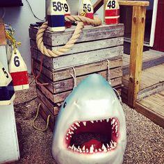 Shark attack In Montauk at #mobydicks ..
