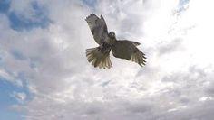 Animals Vs Drones Best Videos