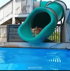 Everything About Cute Corgi Health pembrokewelshcorgi Corgi Gif, Corgi Funny, Cute Corgi, Corgi Meme, Puppy Facts, Pembroke Welsh Corgi Puppies, Really Cute Puppies, Cute Funny Animals, Animals And Pets