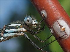 How I Captured This Close Up of a Damselfly - by Ruth Cooper Close Up Photography, Cherry Tree, Photo Tips, Cherry Blossom Tree, Photography Tips
