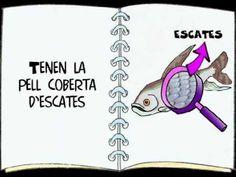 Els peixos. Per nens i nenes de 5-6 anys , creat per Marta Padulles Roig
