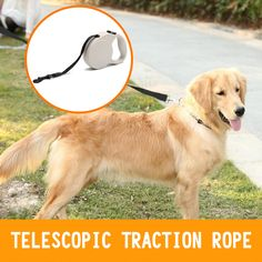 Find More Leashes Information about 3M 5M Retractable Dog Leash Extending Puppy Walking Leads For Dogs Teddy Chihuahua,2M coleira para cachorro CL119,High Quality lead pure,China lead furniture Suppliers, Cheap lead pendant from Tongmao Pets Store on Aliexpress.com