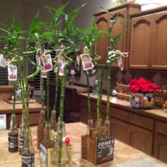 Recycled soda bottles used as vases for Lucky Bamboo stalks...Cute way to display Lucky Bamboo in your shop!