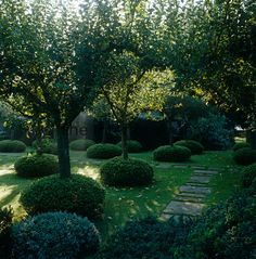 An orchard of mixed English apple trees each trunk encircled by clipped Hebe with a path of York stone laid in the grass