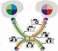 las vías visuales