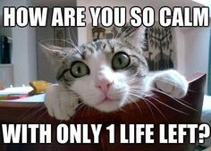 funny cat pictures with captions for facebook | Funny Animal Pictures With Captions