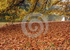 Photo about Forest river , fallen yellow autumn leaves , in cloudy autumn weather. Image of grass, brown, flora - 78947562 Yellow Tree, Yellow Leaves, Forest River, Autumn Leaves, Grass, Flora, Carpet, Tapestry, Weather