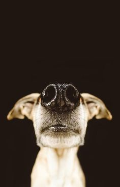 "German photographer Elke Vogelsang she took her love of dog photography down to nose level for a playful series, titled ""Nice Nosing You"" #NationalDogDay"