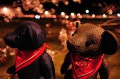 清水へ祇園をよぎる桜月夜今宵逢う人 皆美しき 与謝野晶子 大島紬 クマ くま テディベア