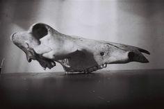 skull Skull, Photography, Art, Art Background, Photograph, Fotografie, Kunst, Photoshoot, Performing Arts