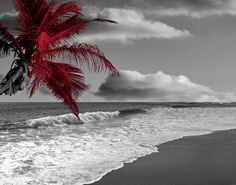 Contemporary Red Gray Wall Art Photography/Coastal/Palm/Beach/Ocean/Bedroom/Bathroom Home Decor Matted Picture