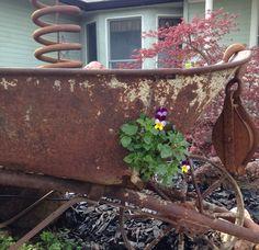 Peek a Boo Johnny Jump Up! Rustic Garden Decor, Rustic Gardens, Johnny Jump Up, Peek A Boos, Farmhouse Garden