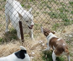How to Stop the Fence Wars: 4 Tips for Dogs Barking at Each Other