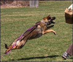 Awesome site for clicker training references.  It's for schutzhund, but starts with some basic commands.