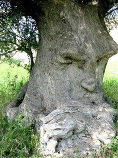 the grumpy old gum tree.I'm the grumpy old gum tree. Weird Trees, Enchanted Tree, Tree People, Tree Faces, Unique Trees, Tree Carving, Old Trees, Nature Tree, Tree Art