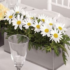 Google Image Result for http://www.seattleflowers.com/gallery/daisy-centerpiece/daisy-centerpiece-ws-116-21.jpg