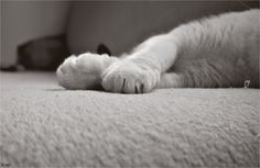 Paws. by may-flower-smile.deviantart.com on @deviantART