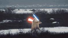 Polar Bear Star Wars Gif | Funny Joke Pictures
