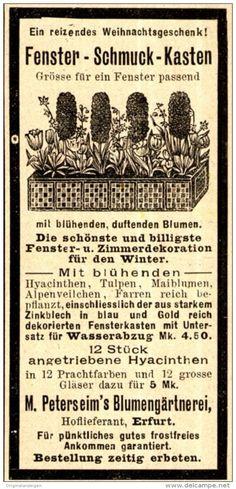 Original-Werbung/ Anzeige 1898 - FENSTER-SCHMUCK - KASTEN / PETERSEIM - ERFURT…