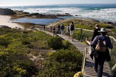 News 24 - De Hoop Nature Reserve article Nature Reserve, Conservation, Playground, Places To See, South Africa, Tourism, National Parks, Mountains, Hoop