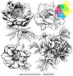 Engraved hand drawn illustrations of ornate peonies. Flower buds, leaves and stems can be easily separated and removed by Shlapak Liliya, vi...