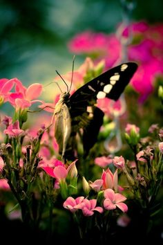 Butterfly wonderland by on DeviantArt Butterfly Images, Butterfly Kisses, Butterfly Wings, Butterfly Flowers, Madame Butterfly, Yellow Flowers, Beautiful Butterflies, Beautiful Flowers, Beautiful Things