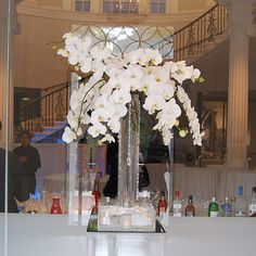 orchids at entrance