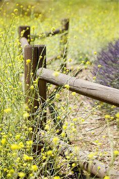 Happy Fence Friday!   Flickr - Photo Sharing!