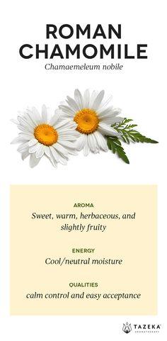 Roman Chamomile Profile | (Source: Aromatherapy For the Healing Spirit - Gabrial Mojay) #Tazeka