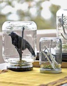"""DIY Halloween """"specimen"""" jars. Used a mason jar I had on hand, a """"spooky"""" branch and a plastic spider ring. Cute."""