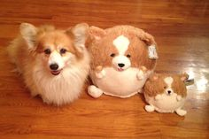 This is Spice and her new friends. (Submitted by Dylan M.)