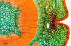 Eckhard Völcker:   Exploring the Microscopic World