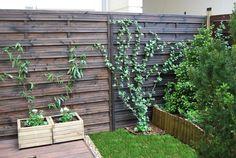 aranżacje ogródka - Szukaj w Google