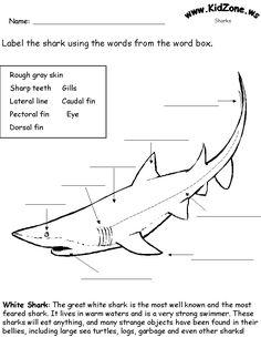 Shark Activity Sheet - Labelling a Great White Shark (Beginner)
