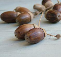 A legismertebb őszi díszítő termés. A kocsányos tölgy makkja az egyik legszebb őszi dekorációs kellék.