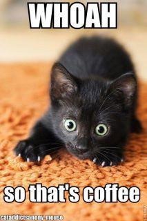 caffeine kitty
