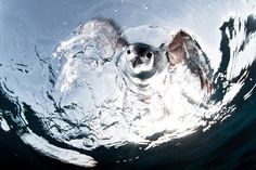 Photo of the Day: Best of June A Hawaiian petrel seen from underneath the water Photograph by Alejandro Prieto