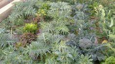 Cada cultivo necesita un espacio mínimo para poder desarrollarse correctamente. Valencia, Plants, Veggie Gardens, Planters, Plant, Planting