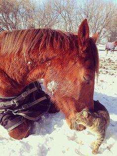Klip7 Entretencion: Tierna imagen de caballo y gato  [9-12-15]